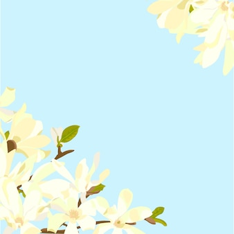 파란색 배경에 목련 꽃 프리미엄 벡터