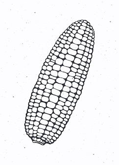 Кукуруза или кукурузный початок без листьев здоровая вегетарианская пища векторная иллюстрация