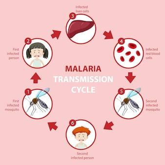 マラリア感染サイクルと症状情報のインフォグラフィック