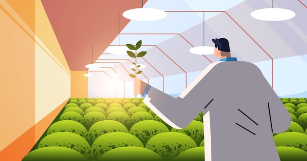 Male agricultural engineer researching plant in greenhouse agriculture scientist smart farming