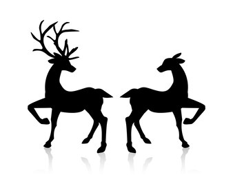 Male And Female Deers Isolated On White Background