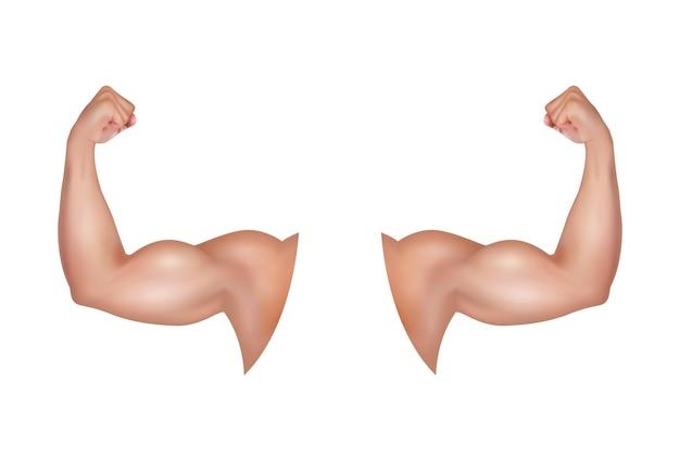 大きくて強い上腕二頭筋を持つ男性の腕健康的な力スポーツマンの緊張した屈曲筋