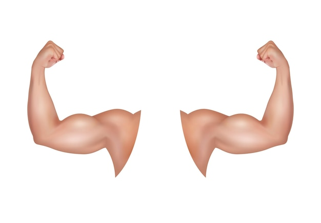 Male arm with a big strong bicep healthy power tense flex muscles of sportsman