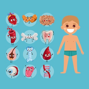 Male body anatomy illustration with child