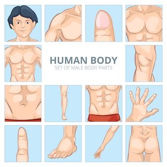 漫画風の男性の体の部分。人間の胸、膝と腹部、足と手、臀部のお尻、指と指骨。ベクトルイラストアイコンセット