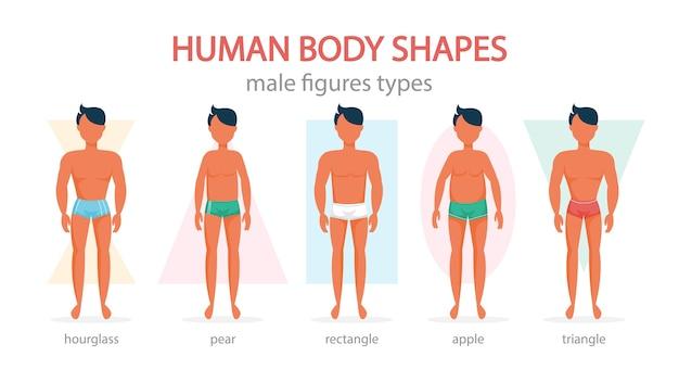 남성의 몸 모양을 설정합니다. 삼각형과 직사각형, 배와 사과