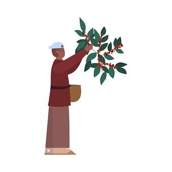 Фермер-мужчина собирает урожай кофейных зерен на сельскохозяйственной плантации
