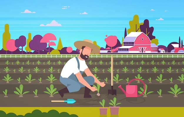 Male farmer planting young seedlings plants vegetables man working in garden agricultural worker eco farming concept farmland field countryside landscape flat full length horizontal