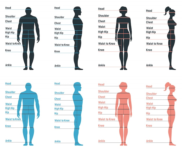 Male and female size chart anatomy human character, people dummy front and view side body silhouette, isolated