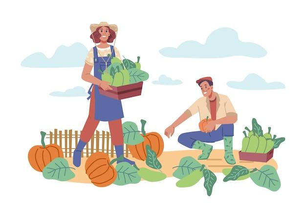 Мужчина и женщина собирают урожай тыквы и тыквы