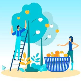 사다리에 남자와 여자는 나무에서 사과를 뽑아.