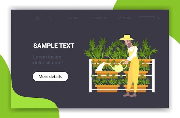 Man farmer watering cannabis industrial hemp plantation growing marijuana plant drug consumption agribusiness concept horizontal full length copy space