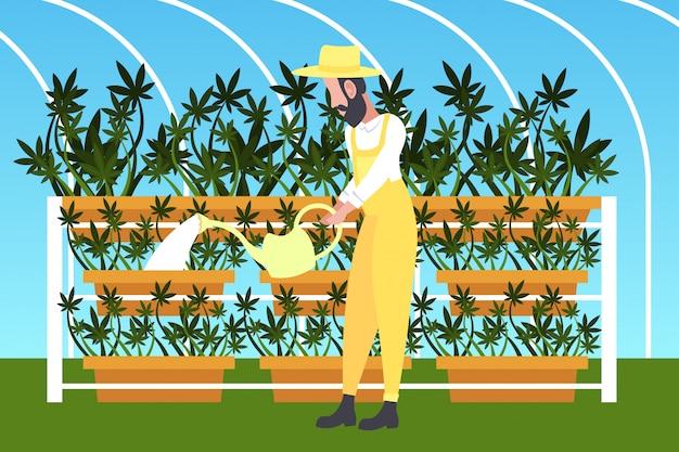 Man farmer watering cannabis industrial hemp plantation growing marijuana plant drug consumption agribusiness concept horizontal full length