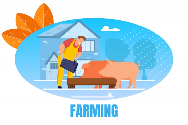 Man feed pigs putting grain in trough in livestock banner Premium Vector