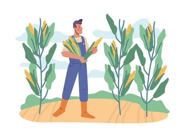 Человек собирает урожай осенью вектор кукурузы