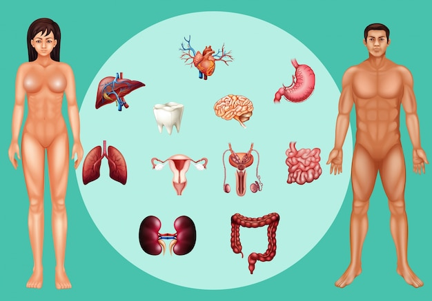 Man and woman with different organs on poster