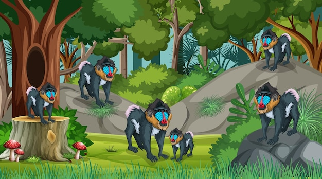 Mandrill family in forest at daytime scene with many trees