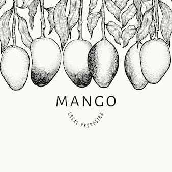Mango design template. hand drawn vector tropic fruit illustration.
