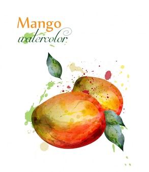 Mango fruit watercolor