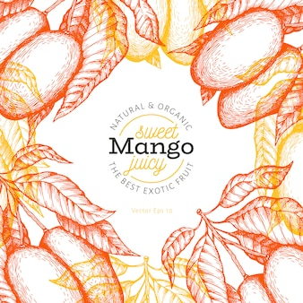 Mango  template. hand drawn  tropic fruit illustration. engraved style fruit. vintage exotic food .