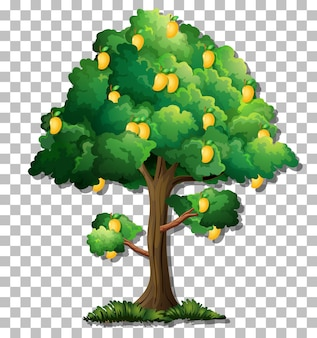 透明な背景にマンゴーの木