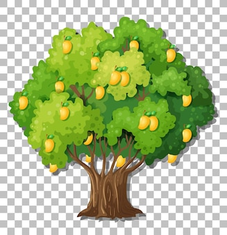 Albero di mango su sfondo trasparente