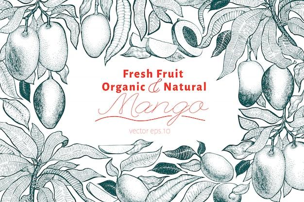 Mango tree vintage background. botanical mango fruit frame. engraved mango. retro illustration