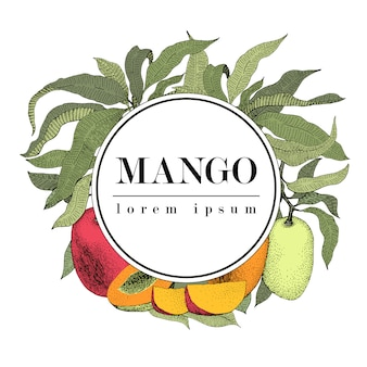 Mango tree vintage design template. botanical fruit frame. engraved mango. logo template. retro illustration
