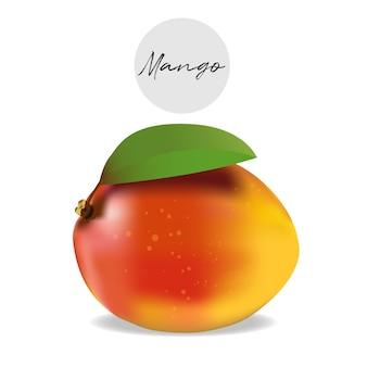 Mango tropical fruit vector