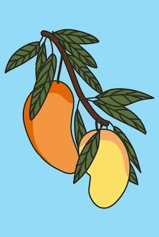 Манго фрукты.