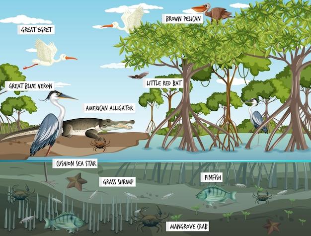 많은 다른 동물과 함께 낮에 맹그로브 숲 풍경 장면