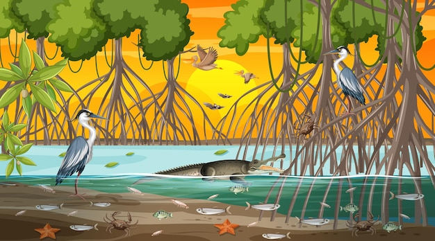 Сцена пейзажа мангрового леса во время заката с множеством разных животных