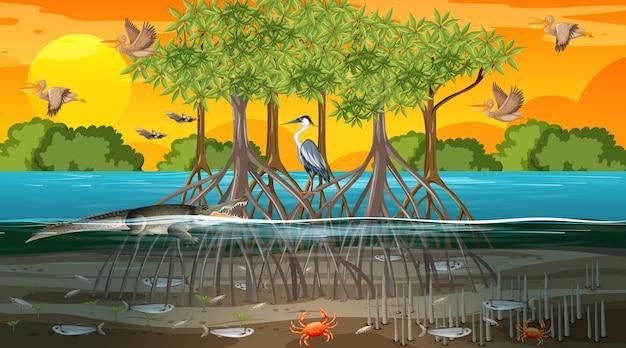 많은 다른 동물들과 함께 일몰 시간에 맹그로브 숲 풍경 장면