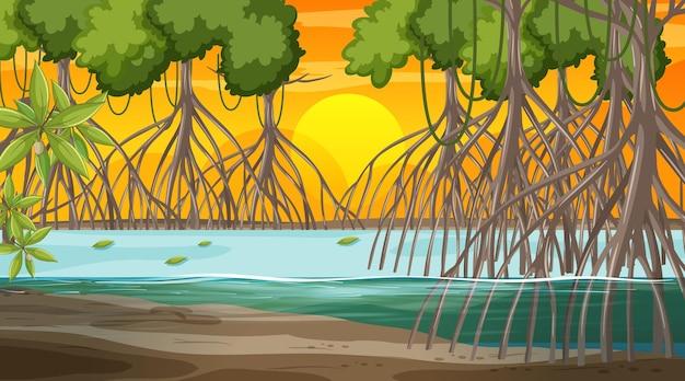 Mangrove forest landscape scene at sunset time