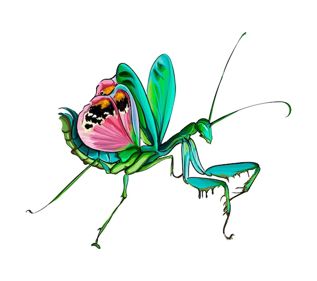 Mantis in a defensive position from multicolored paints splash of watercolor colored drawing