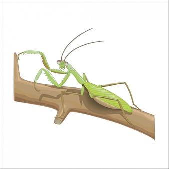 Mantis sitting on a branch
