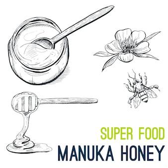 Manuka honey, super food hand drawn