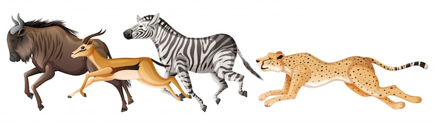 Many african animals running on white