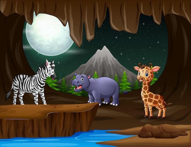 夜の洞窟にはたくさんの動物がいます