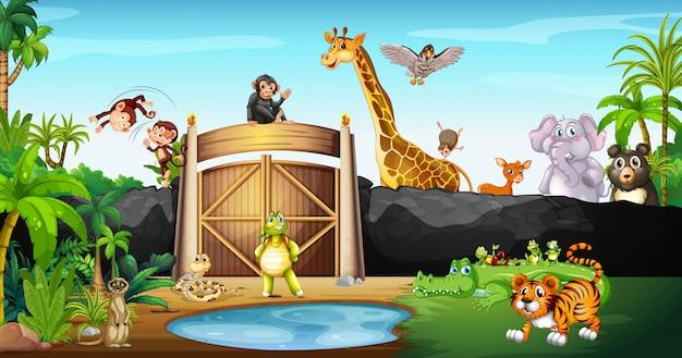 Много животных в парке