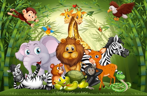 Molti simpatici animali nella foresta di bambù