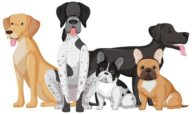 白い背景で隔離のグループで多くのかわいい犬