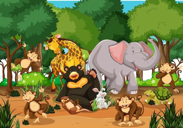 Molti animali diversi nella scena della foresta