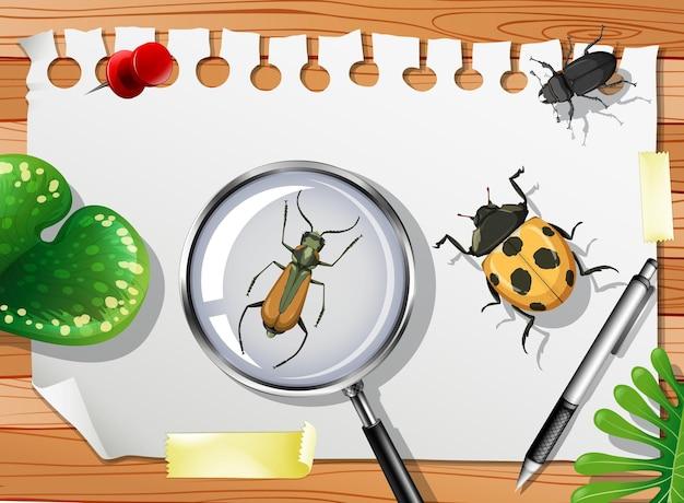 テーブルの上の多くの異なる昆虫がクローズアップ
