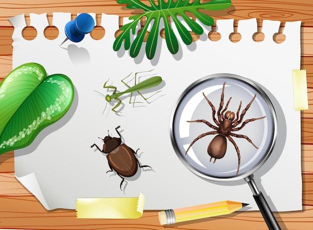 Molti insetti diversi sul tavolo si chiudono