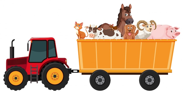 Many farm animals on the tractor