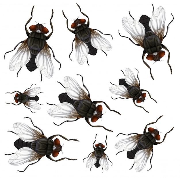 Many fly on white background