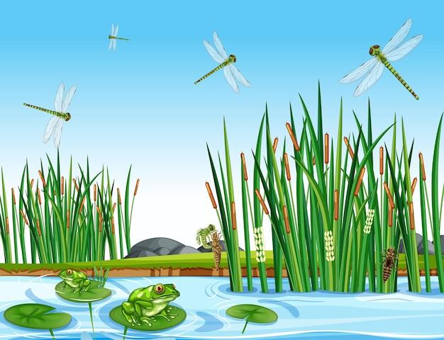 Molte rane verdi e libellule nella scena dello stagno