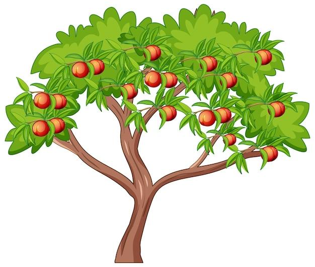 Многие персики на дереве, изолированные на белом фоне