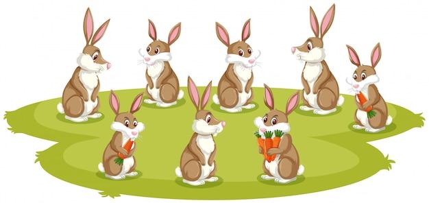 緑の芝生の上の多くのウサギ